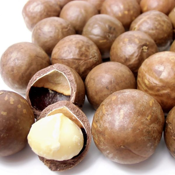 macadamia nuts in a shell